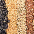 Cereal Grains and Seeds : Rye, Wheat, Barley, Oat, Sunflower, Flax — Stock Photo #44323049