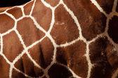 Giraff mönster — Stockfoto