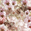 Butterflies and orchids flowers pink background ( 1 of set) — Stock Photo #10188173