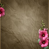 Textured background with mallow — Stock Photo