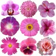 Set of Pink Flowers Isolated on White — Stock Photo