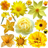 Yellow flower collage — Stock Photo