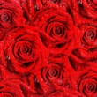 Backgrounds with red roses for Valentines — Stockfoto