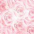 Pink roses — Stock Photo #19661549