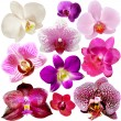 Collection of orchid flower isolated on white - Stok fotoğraf
