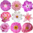 Set of Pink White Flowers Isolated on White - Stok fotoğraf