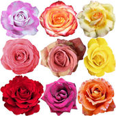 Rosa blom — Stockfoto