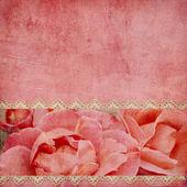 Vacker rosa bakgrund med horisontella rosor banner — Stockfoto