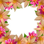 Colorful flower frame isolated on white background — Stock Photo
