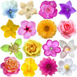 Flower heads isolated on white — Stock Photo #24891593