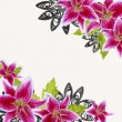 Pink bridal lilies border on white background - Stockfoto