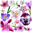 Spring flower collection isolated on white background — Stock Photo