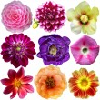 Colorful Flowers Isolated on White Background — Stok Fotoğraf #24942843