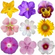 Stock Photo: Set of flowers