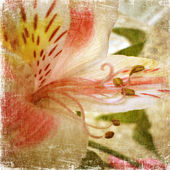 Old grunge background with white-pink lily — Stock Photo