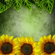 Green Leaves Frame ans Sunflowers  On grunge Green  Background - Stok fotoğraf