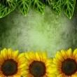 Green Leaves Frame ans Sunflowers  On grunge Green  Background — Stock Photo
