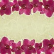 Orchids frame — Stock Photo #26618405