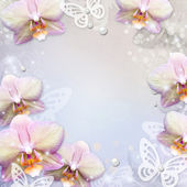 Orchids border and butterfly — Stock Photo