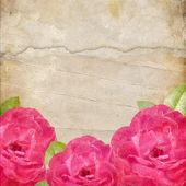 Staré roztrhané papírové pozadí. textura s růže — Stock fotografie