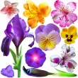 Set of botanical spring flowers  — Stok fotoğraf