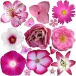 pembe çiçekler üzerinde beyaz izole kümesi — Stok fotoğraf #28966627