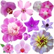 Set of flowers on a white background — Stock Photo