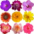 Collection of Flower heads isolated on white background  — Stockfoto