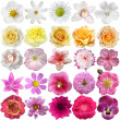 Big Selection of Various Flowers Isolated on White Background — Stok fotoğraf