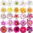 Big Selection of Various Flowers Isolated on White Background — Stock Photo