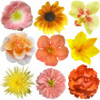 Collection of Yellow - Orange  Flowers Isolated on White — Foto Stock