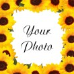 Sunflowers — Stock Photo #3086194