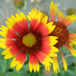 Stock Photo: Red and yellow flower