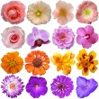 Set of colorful seasonal blooms — Stock Photo #31422851