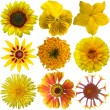 Collage of isolated yellow flowers — Stok Fotoğraf #31422865