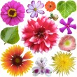 Big Selection of Colorful Flowers Isolated on White Background — Stock Photo #31422947