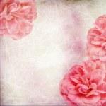 Фоне красивых розовых роз — Стоковое фото