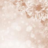 красивые розовые цветы на фоне боке — Стоковое фото