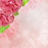 Beautiful pink rose on bokeh background — Stock Photo