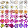Big Selection of Various Flowers Isolated on White Background — Photo