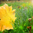 Autumn — Stock fotografie #36937325