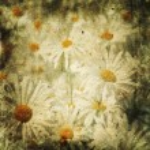 Vintage romantic flowers background — Stock Photo #3904812