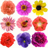 Selection of Various Flowers Isolated on White Background — Stockfoto