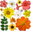 Set of flowers on a white background — Stock Photo #49420791