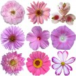 Collection of pink flowers isolated on white — Stok fotoğraf