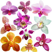 Collection of orchid flower isolated on white  — Foto Stock