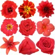 The set of Red Flowers Isolated on White — Stock Photo