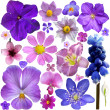 Collection of blue, purple flowers isolated on white background — Stock Photo #49541645
