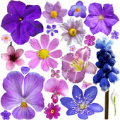 Collection of blue, purple flowers isolated on white background — Stock Photo