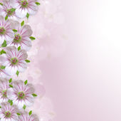 Border of white - pink  flower  on  purple - white background — Stockfoto